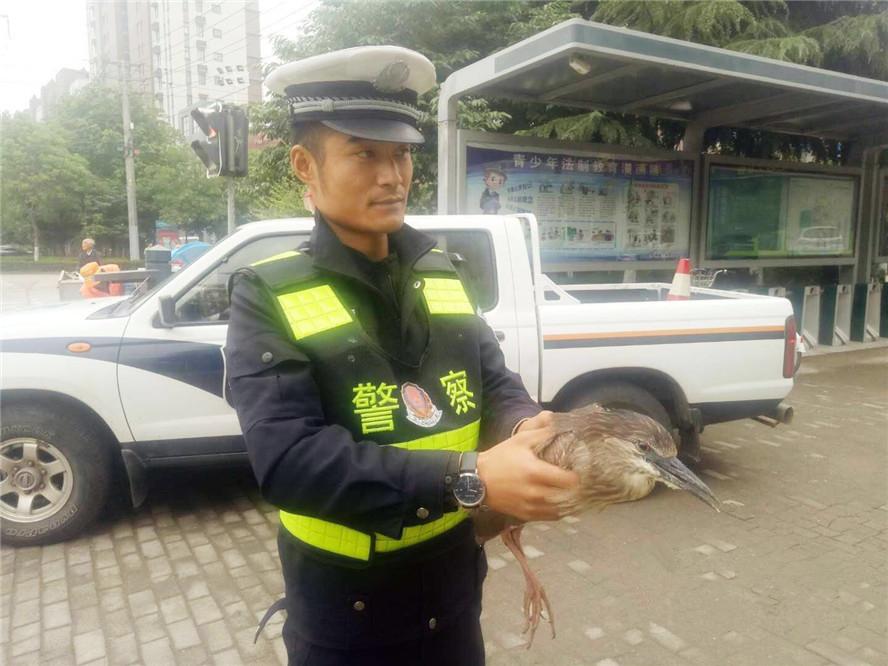 东海一交警巡逻时,发现一受伤国家二级保护动物池鹭