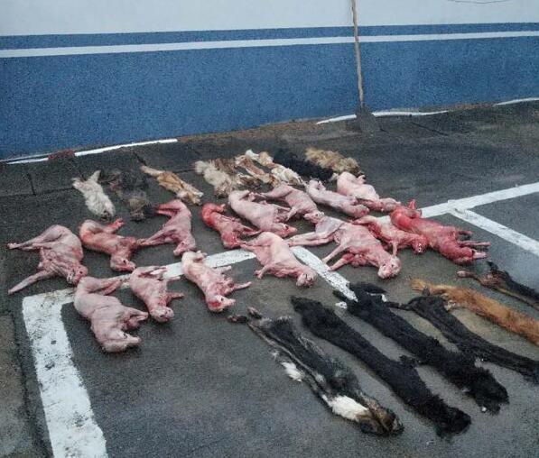 缺德!东海一男子半个月毒死80多条狗!5元一斤卖给狗贩子,然后狗贩子竟然...